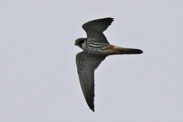 Hobby by Andy Tew - Apr 26th, Fishlake Meadows