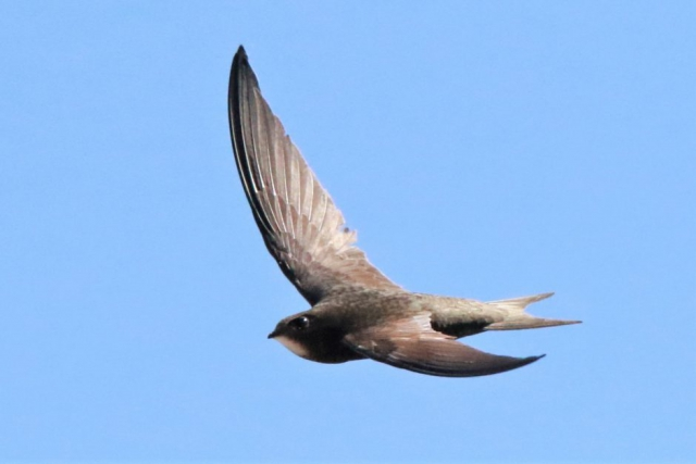 Swift by Andy Tew - June 25th, Romsey