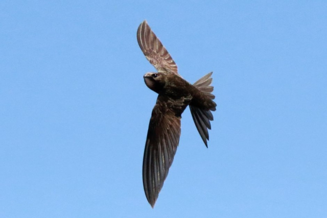 Swift by Andy Tew - July 9th, Romsey