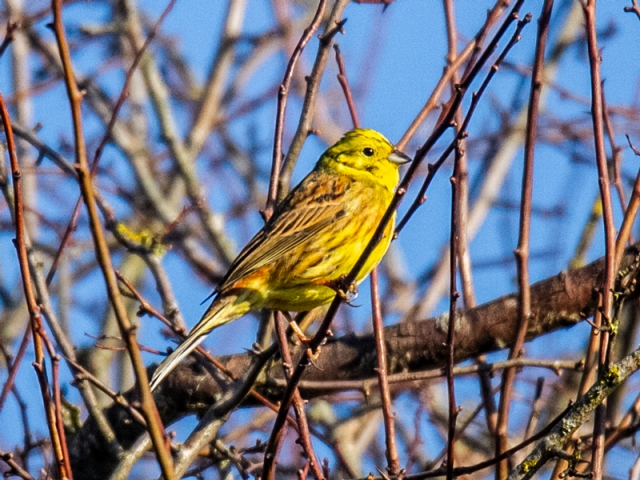 Yellowhammer by Mike Duffy - Feb24th, Ashley Warren
