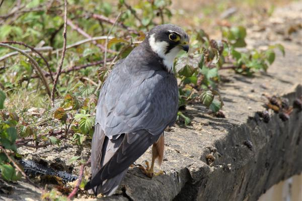 Hobby by Andy Tew - May 7th, Eyeworth Pond
