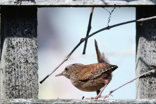 Wren by Brian Cartwright - Jul 23rd, Anton Lake