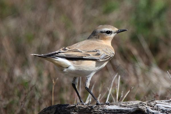 Wheatear by Andy Tew - Aug 29th, Hook Links