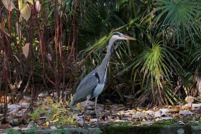 Grey Heron by John Scamell - Nov, Winchester