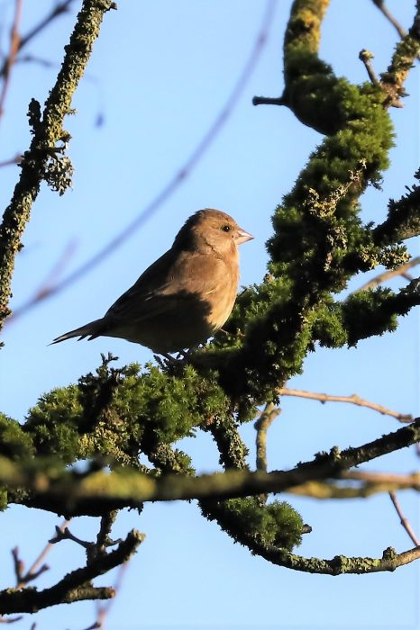 Greenfinch by Brian Cartwright - Jan 29th, Anton Lakes