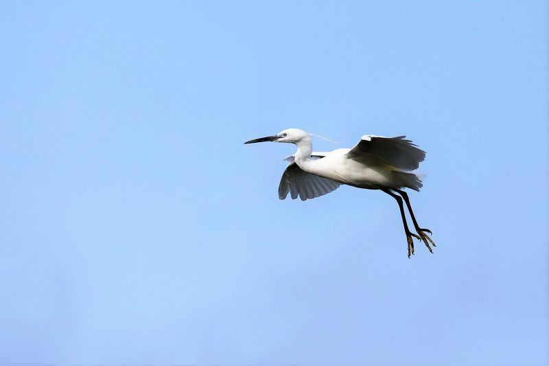 Little Egret by Brian Cartwright - Mar 21st, Anton Lakes