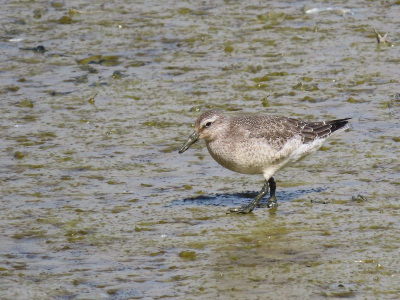 Knot by John Shillitoe - Sep 6th, Titchfield Haven