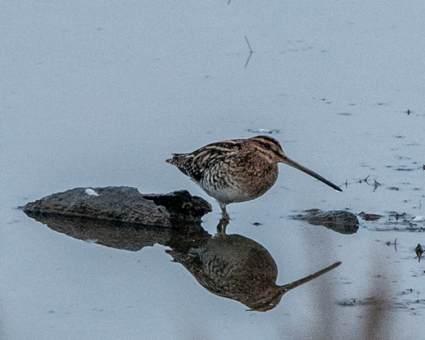 Snipe by Mike Duffy - Sep 22nd, Keyhaven