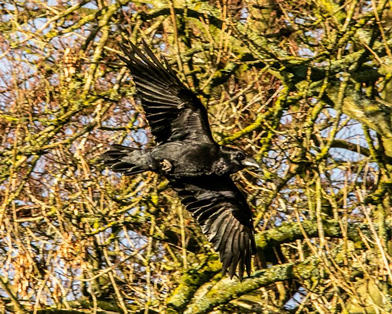 Raven by Mike Duffy - Nov 26th, Ashley Warren