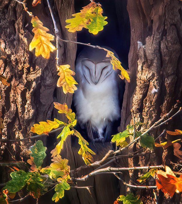 Barn Owl by Steve Payce - Dec 8th, Titchfield