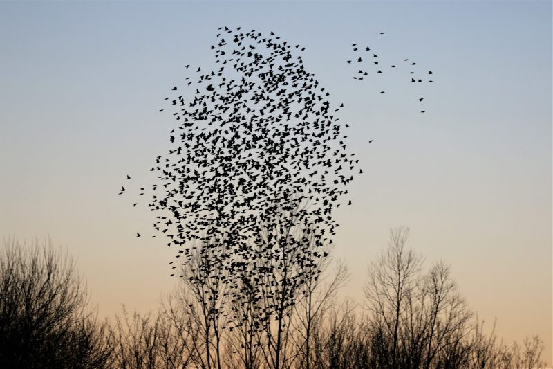 Starling by Andy Tew - Jan 24th, Fishlake Meadows
