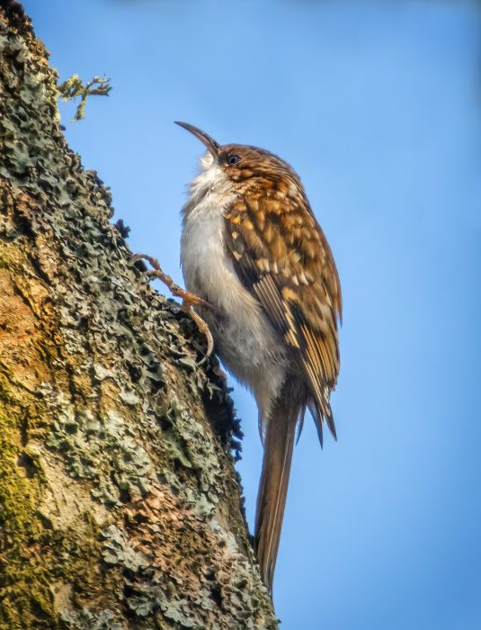 Treecreeper by Steve Payce - Dec 8th, Titchfield canal