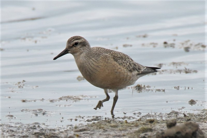 Knot Normandy 30th Aug Andy Tew